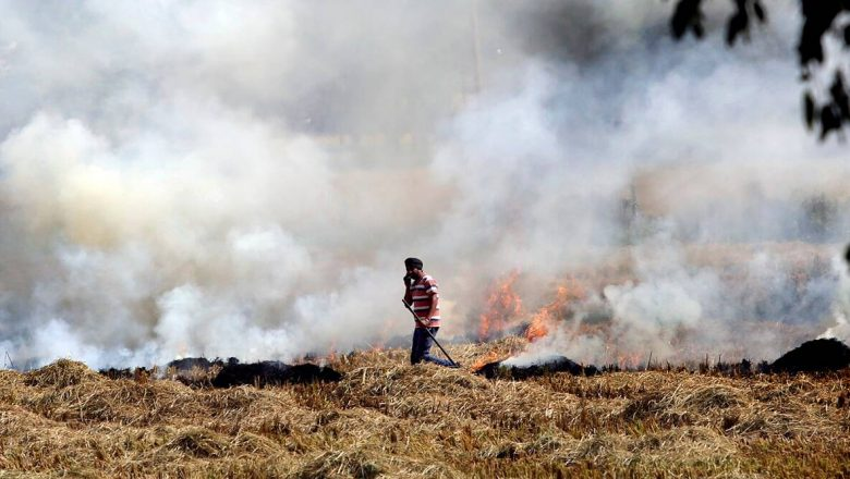 Stubble burning dropped drastically this year: Ministry